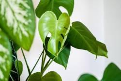 5 ต้นไม้ฟอกอากาศ ช่วยดูดซับสารพิษ ตกแต่งบ้านได้สวยเลิศ