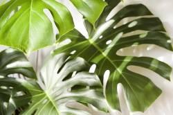 7 ต้นไม้มงคล ช่วยเสริมดวง ปลูกแล้วโชคดี ชีวิตราบรื่น ส่งผลดีกับคนในครอบครัว