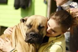3 สายพันธุ์สุนัข ยักษ์ใหญ่ ที่มีนิสัยน่ารักมุ้งมิ้ง ขี้ออดอ้อนเป็นที่สุด
