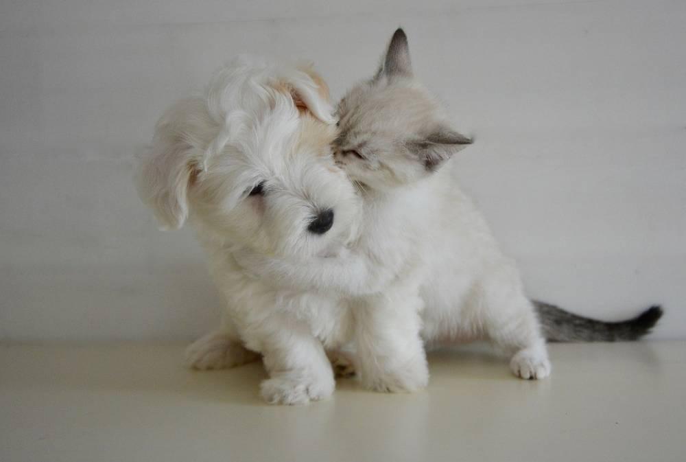 มาเช็คนิสัยและเช็คเรื่องความรักของ กลุ่มคนรักหมา แมว กันเถอะ!