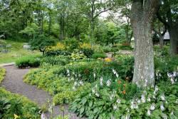 7 ไม้ดอกไม้ประดับ ทนฝน ชอบน้ำมากที่สุด ใช้จัดสวนเพื่อต้อนรับหน้าฝน