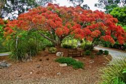 5 ต้นไม้ยืนต้น มงคล มีดอกสวยงาม ปลูกง่าย แถมให้ร่มเงา