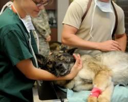 4 โรคสัตว์เลี้ยง ในช่วงฤดูฝน ทำให้น้องหมา-น้องแมวอาจป่วยได้