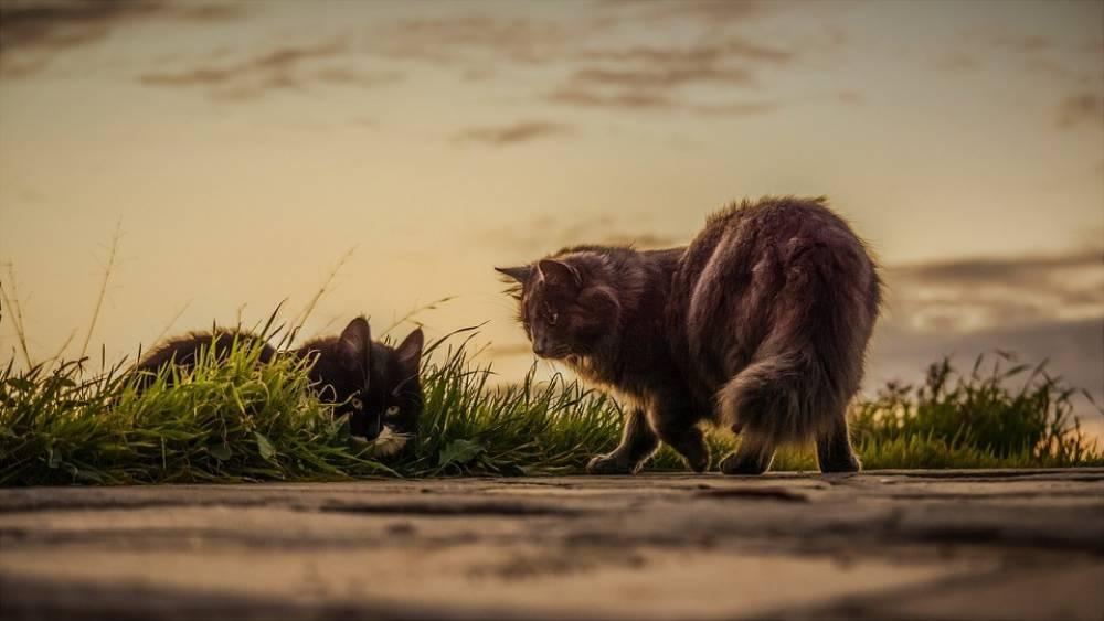 """เรื่องน่ารู้! """"แมวท้องถิ่น"""" กับ """"แมวจรจัด"""" ความหมายที่แตกต่างของชาวญี่ปุ่น"""