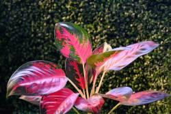 5 ต้นไม้ประดับ ปลูกในน้ำได้ดี โตไว โดยที่ไม่ต้องใช้ดินปลูก