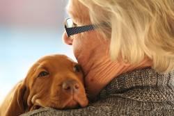 6 สุนัขพันธุ์เล็ก ที่เหมาะสมสำหรับกลุ่มผู้สูงอายุ เป็นเพื่อนซี้คู่ใจ ไม่มีวันเหงา